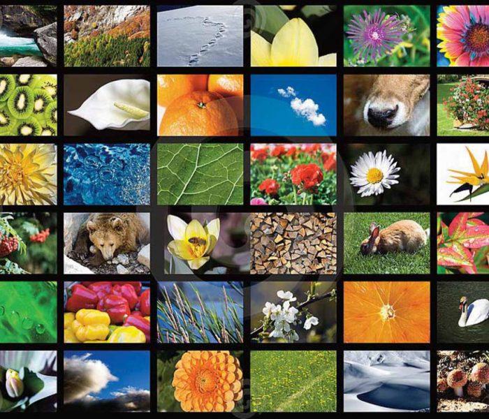 Bloemen- en dierenplaatjes